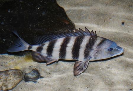 fish Stock Photo - 17328142