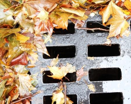 leaf on the wet manhole