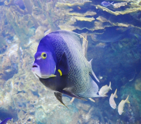 aquarium fish photo