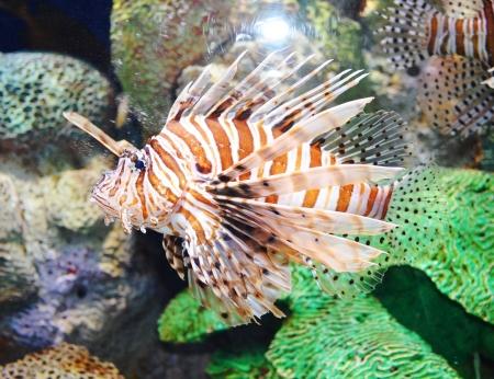 aquarium fish Stock Photo - 17996883