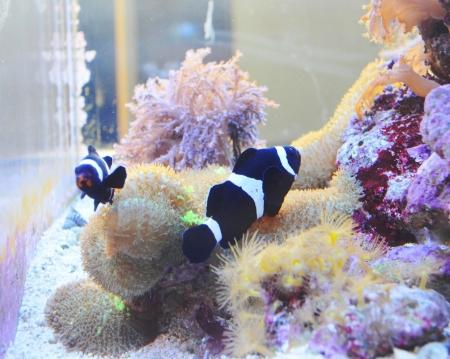 aquarium fish Stock Photo - 17996817