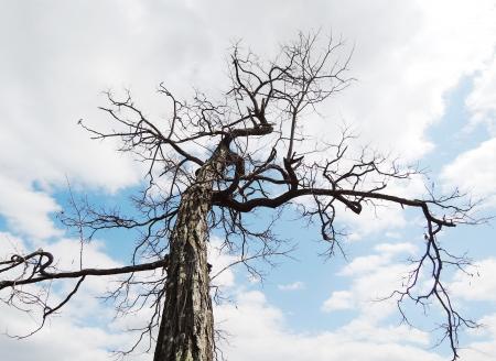 treetop: treetop