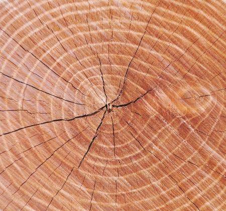 circle tree texture photo