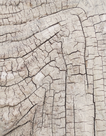 tree bark texture Stock Photo - 20776819