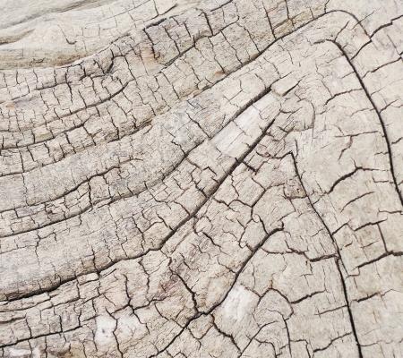 tree bark texture Stock Photo - 20776740