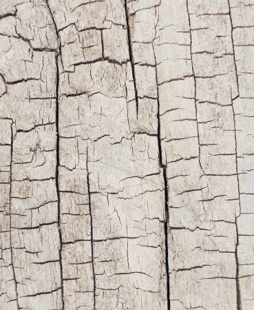 tree bark texture Stock Photo - 20776741