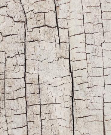 tree bark texture Stock Photo - 20776741