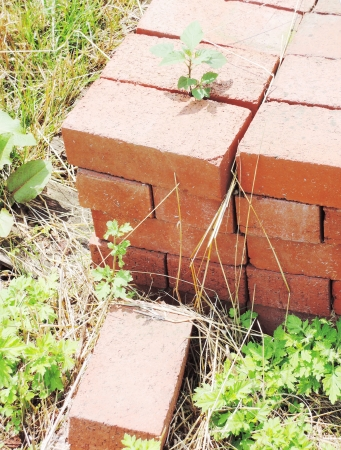 old brick photo