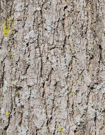 corrosion: tree bark texture
