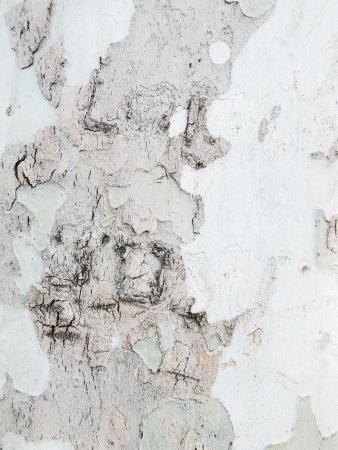 tree bark texture Stock Photo - 20934688