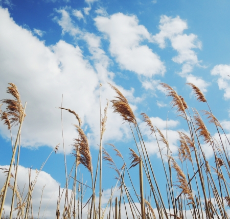 Dry grass on blue sky photo