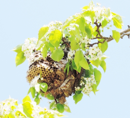 Wasp nest photo