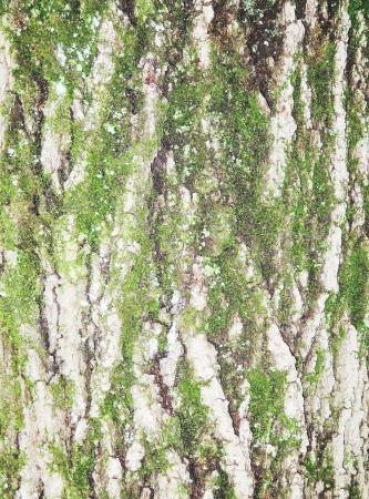 tree bark texture Stock Photo - 21360681