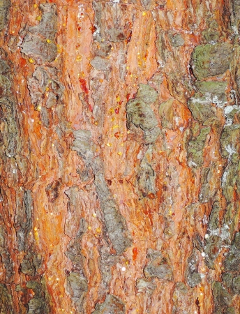 red tree bark texture Stock Photo