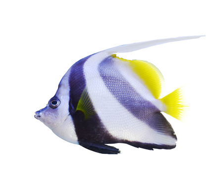 tropical fish:                    aquarium fish