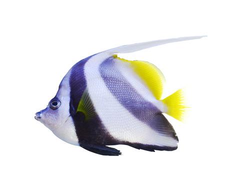 aquarium fish Stock Photo - 23322673
