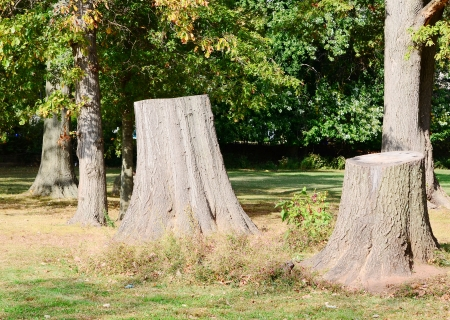 cut grass: Stump of a freshly cut tree in the forest Stock Photo