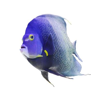 plunging: aquarium fish