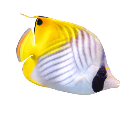 aquarium fish                   Stock Photo - 23711267