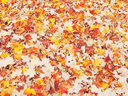 autumn leaves on asphalt photo