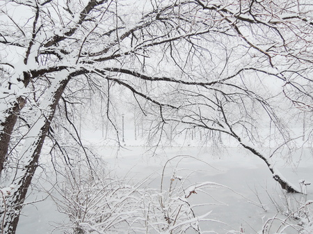 winter in the river photo