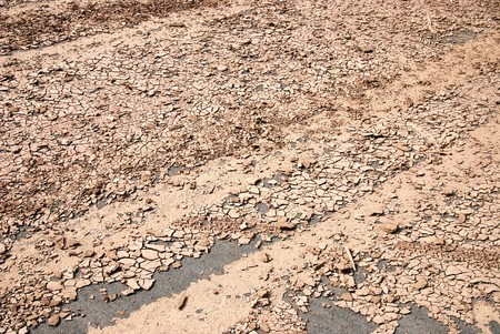 barrenness: Dry soil texture on the ground