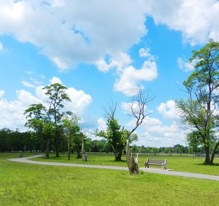park and blue sky photo