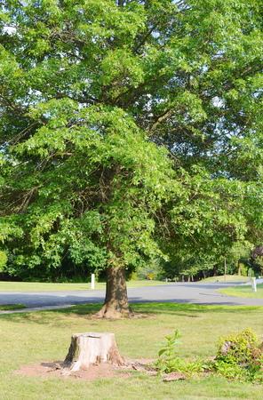 industrial park: Stump of a freshly cut tree