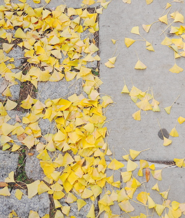Brick pavement blocks with leaves photo