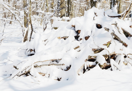 covered in snow: Firewood covered snow