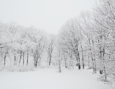 Winter Imagens
