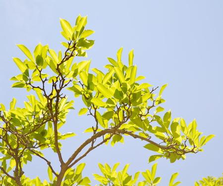magnolia branch: magnolia branch