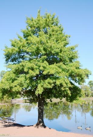 acorn tree: Acorn tree lake