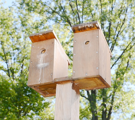 pigeon holes: Bird house Stock Photo