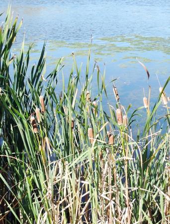 canne: Ance sul lago