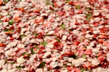 floodlit: Blurred background Stock Photo