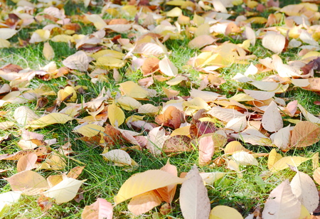 Autumn leaves on the floor Stock Photo