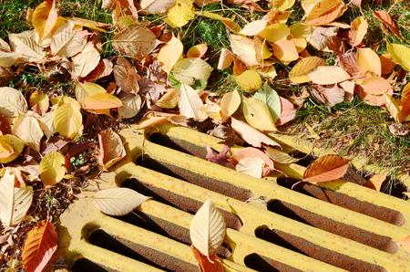 manhole: Manhole with leaves
