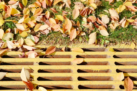 metal grate: Manhole with leaves
