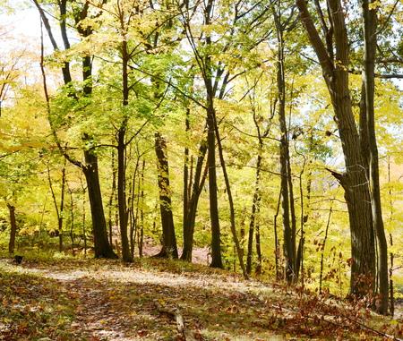 autumn forest: Autumn forest Archivio Fotografico