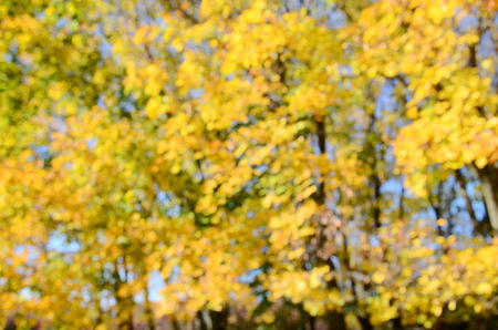 cielo azul: Otoño fondo borroso