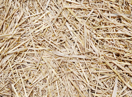 hayrick: The natural texture of dry straw Stock Photo
