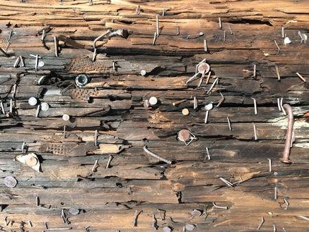 parquet floor layer: Nail on the tree bark texture