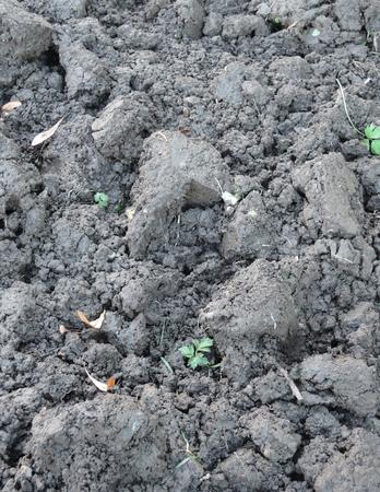 earth handful: black soil Stock Photo
