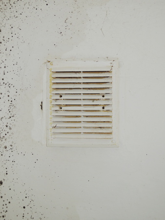 Mould wall background Stock Photo