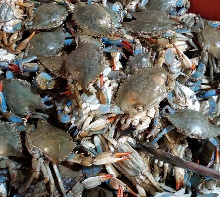 crabs Imagens