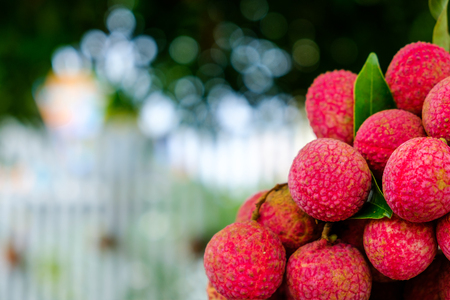 Beautiful lychee fruit Asia Thailand in nature
