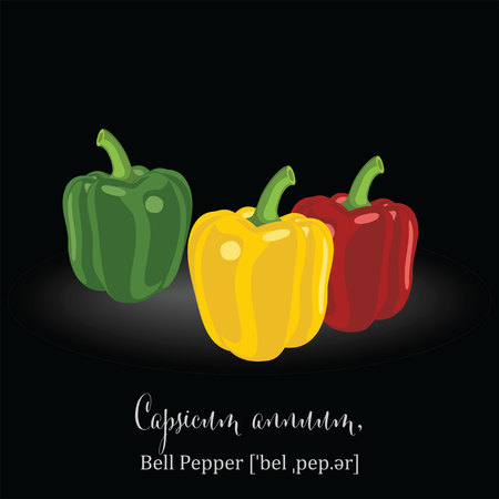 organic peppers sign: Organic Food Icon. Bell Pepper.