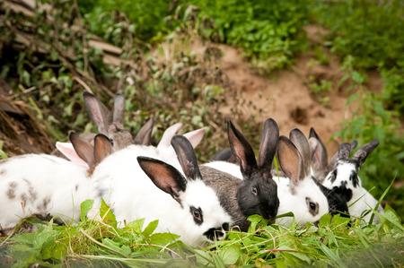 fluffy: Conejos comen hierba mullidas Foto de archivo