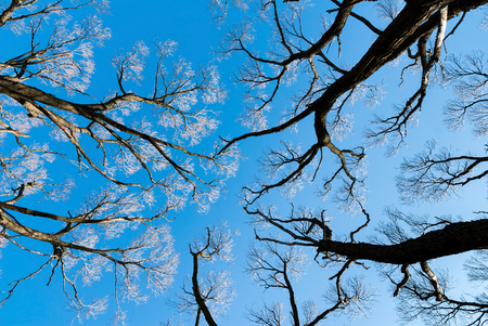 nude outdoors: Tree branches in early spring against a blue sky